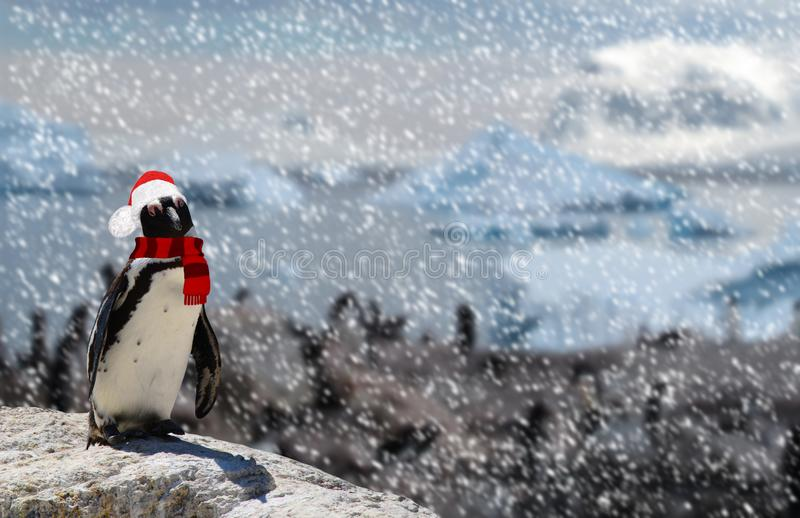Winter season concept a funny penguin standing on a rock wearing a santa claus hat and scarf while snowing and a family of penguin stock photography