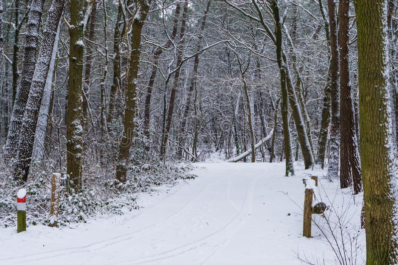 Winter season in a dutch forest landscape, white snowy forest road and trees, european forest in the netherlands. A winter season in a dutch forest landscape royalty free stock photo