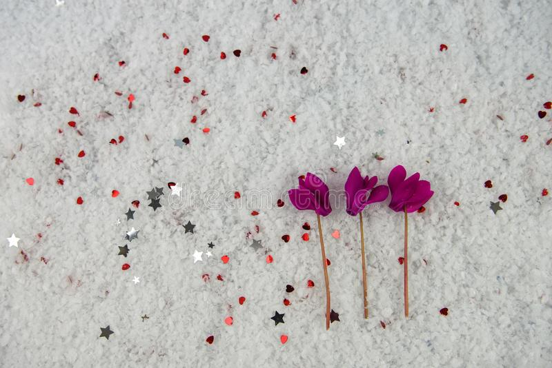 Winter season flower photography image with pink cyclamen blooms laid in snow and sprinkled with small silver color stars. Taken on South coast England UK from stock photo