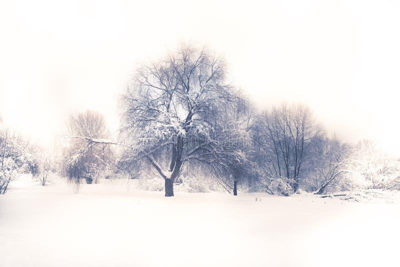 Winter season landscape white snow field forest trees white sky in soft blue purple colors stock image