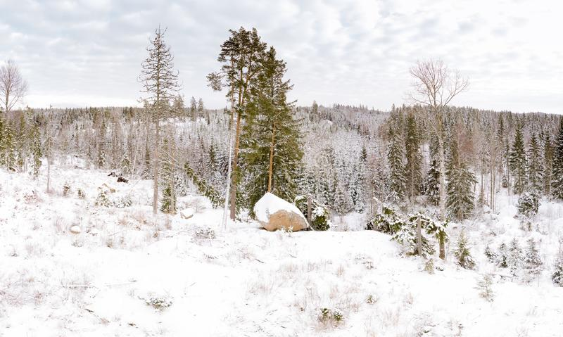 Winter season panoramic landscape. Forested landscape during the cold season stock photo