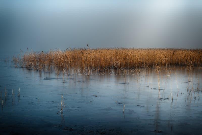 Winter See im Nebel stockfoto
