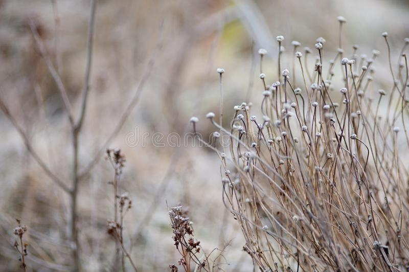Download Winter Seed Head In A Frosty Landscape Stock Photo - Image of head, space: 106814818