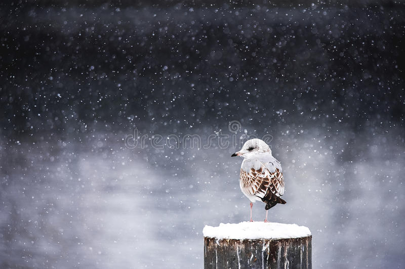 Download Winter silence stock image. Image of calm, snow, outdoor - 69911197