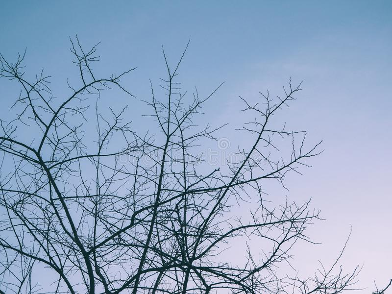 Winter Sky and Skinny Branches royalty free stock photography