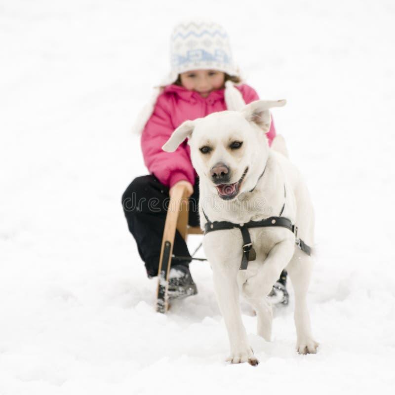 Winter sledding with dog royalty free stock photo