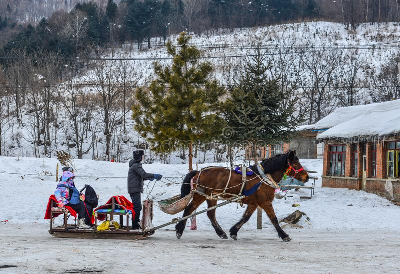 Winter sleigh rides pulled by horse in snow royalty free stock photo