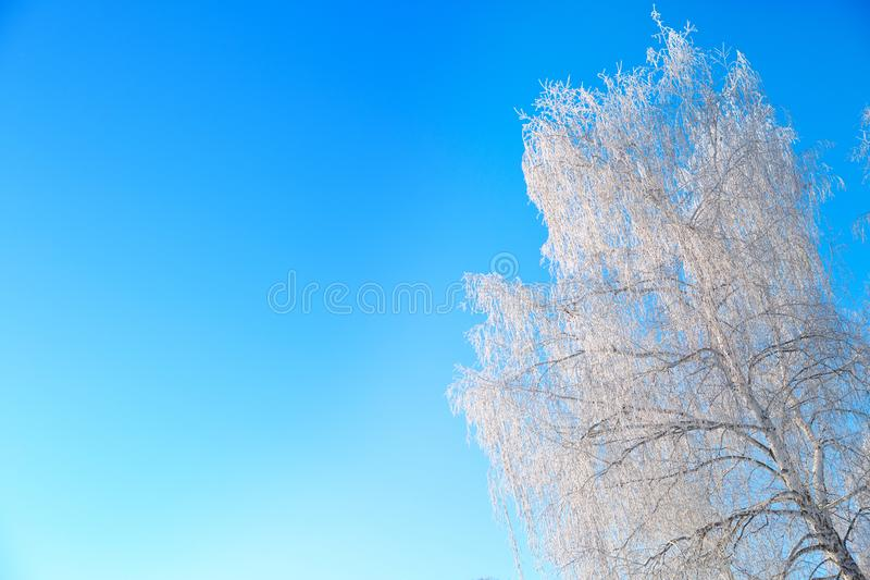 Winter snow birch tree branches on blue sky. Winter landscape royalty free stock image