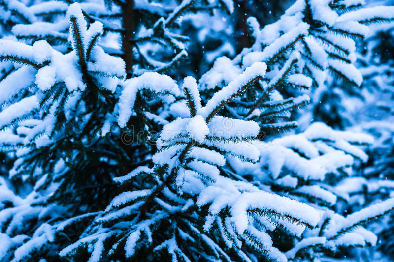 Winter Snow Christmas Tree 11 royalty free stock photography