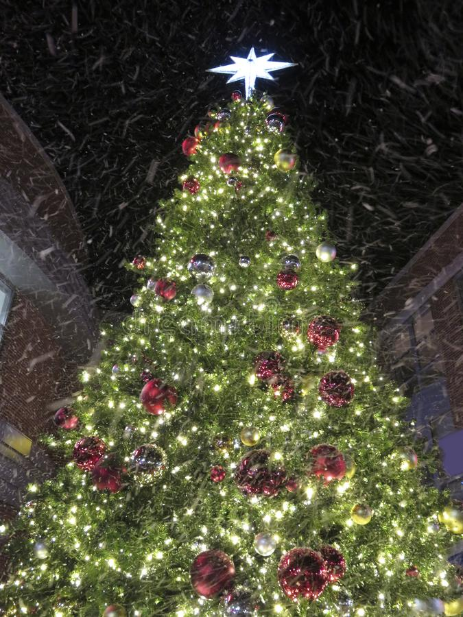 Winter Snow and Christmas Tree. Photo of christmas tree at night with artificial snow being sprayed on it stock photography