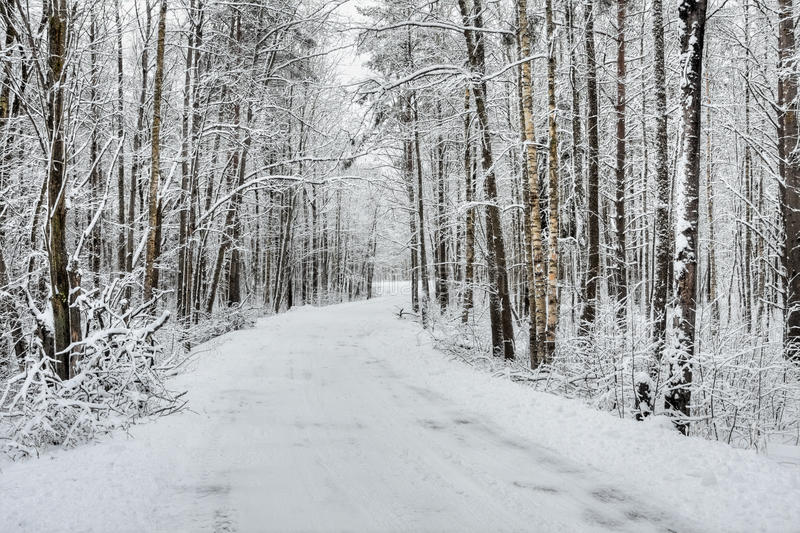 Download Winter snow-covered forest stock photo. Image of background - 22799730