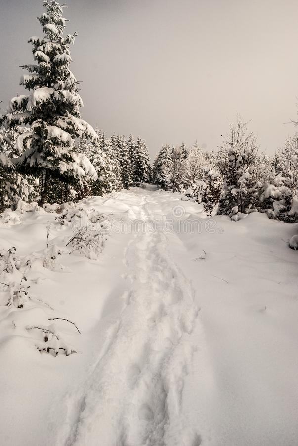 Winter snow covered hiking trail with trees around. Near Polomka hill in Moravskoslezske Beskydy mountains on czech - slovakian borders stock photo