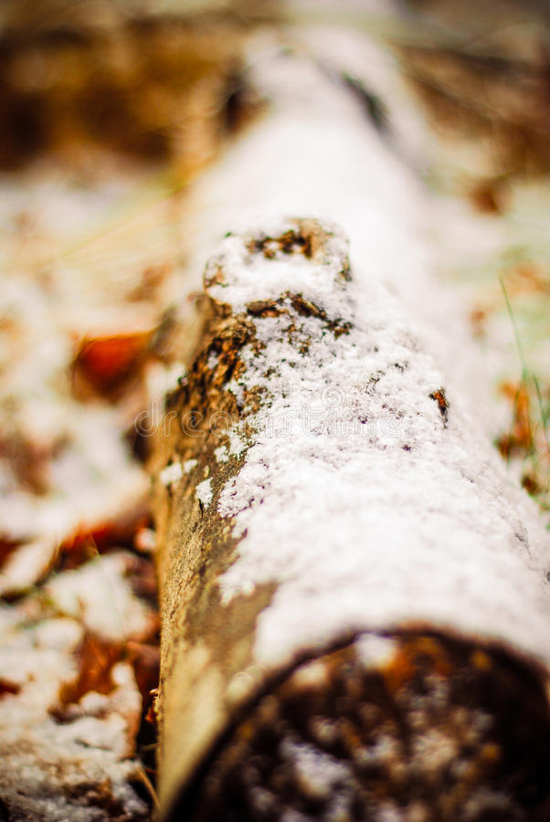 Winter snow covered log in my back yard stock photography