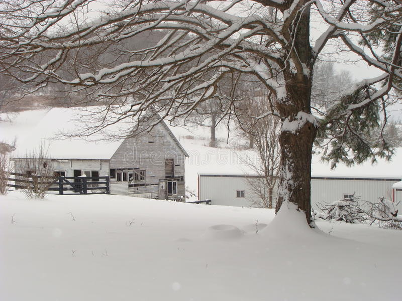 Download WINTER SNOW ON THE FARM stock photo. Image of beautiful - 24812690