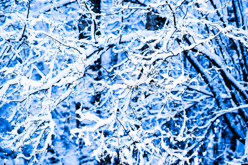 Winter Snow Forest 12 royalty free stock photo