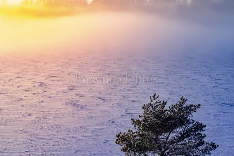 Winter snow forest trees sunset background. Red sunset in winter snow forest trees scene. Winter sunset snow forest royalty free stock images
