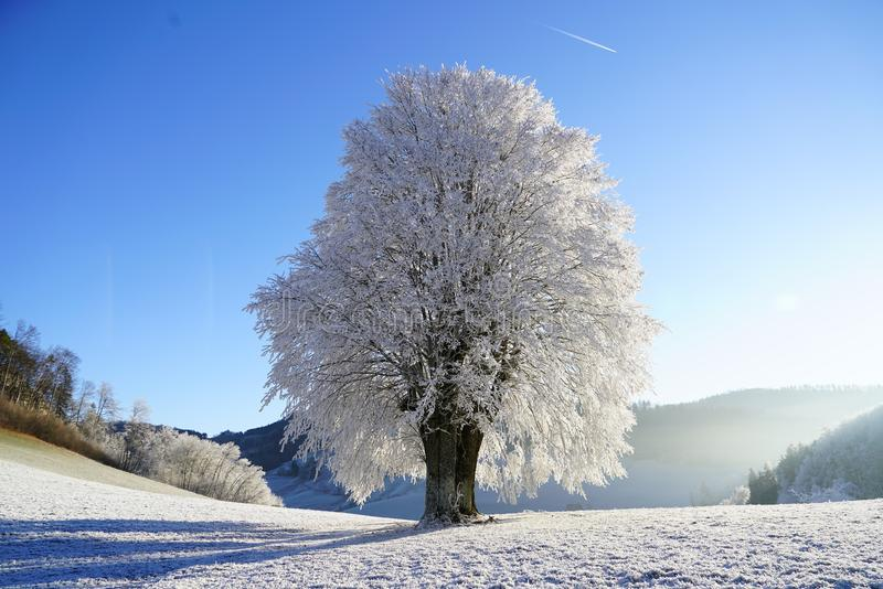 Winter, Snow, Frost, Sky royalty free stock image