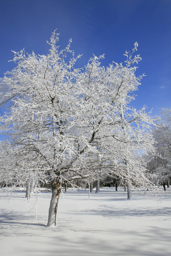 Download Winter, Snow And Ice Covered Trees, Park Stock Image - Image: 7221805