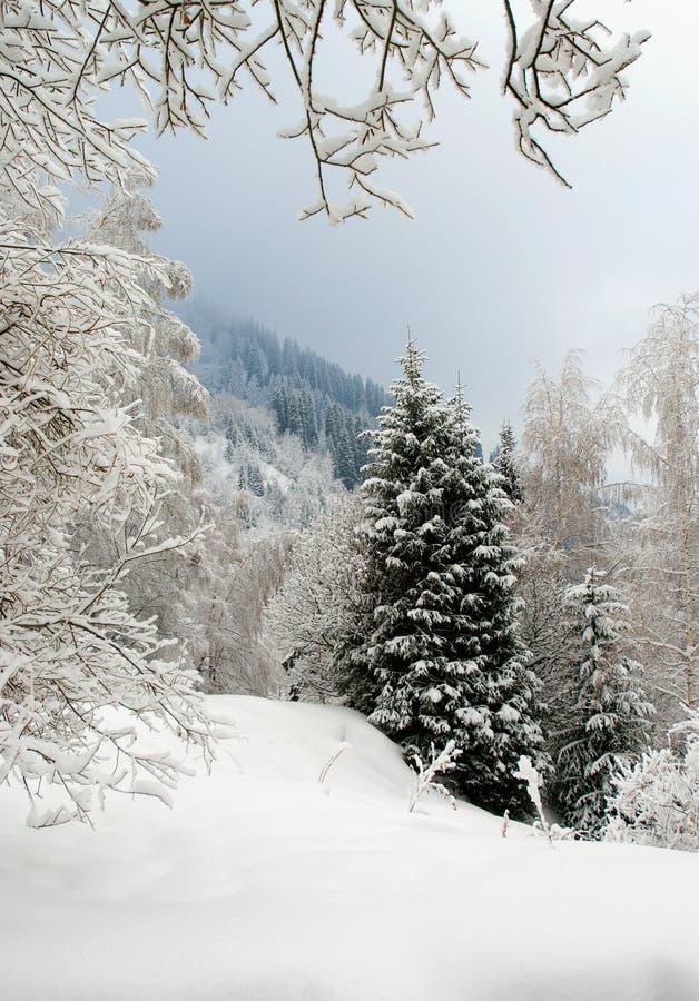 Winter snow scene stock photo