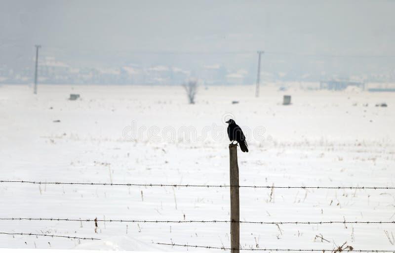 Winter snow season landscape and crow bird.  stock image