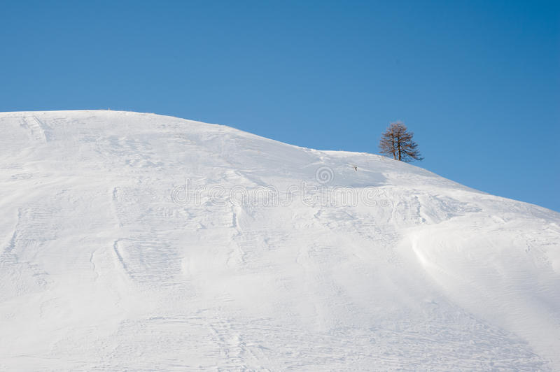 Download Winter:snow, Tree And Blue Sky. Royalty Free Stock Photo - Image: 22846975
