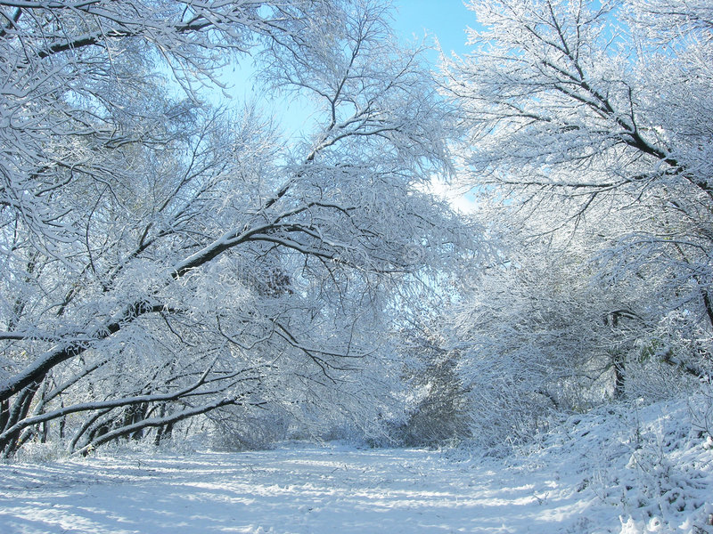 Download Winter Snow And Trees. Stock Image - Image: 7105431