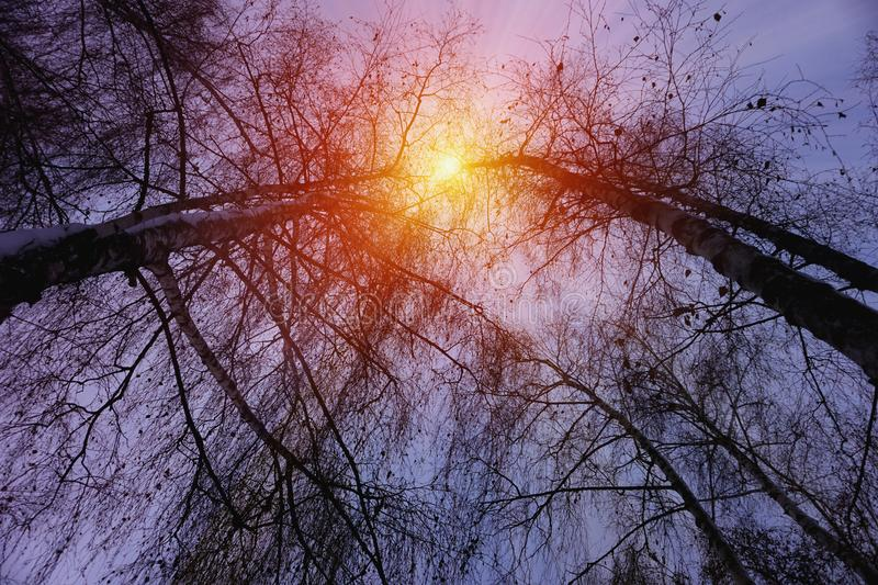 Winter snow trees with bright yellow sun with long sunny rays. Bright yellow sun with long sunny rays. Winter snow trees with white snow surface on fir branches stock images