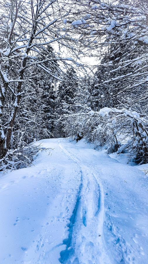 Winter snow white magic sapins royalty free stock photography