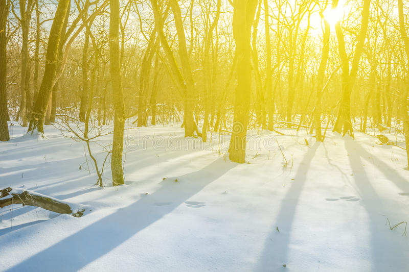 Winter snowbound forest scene stock photography