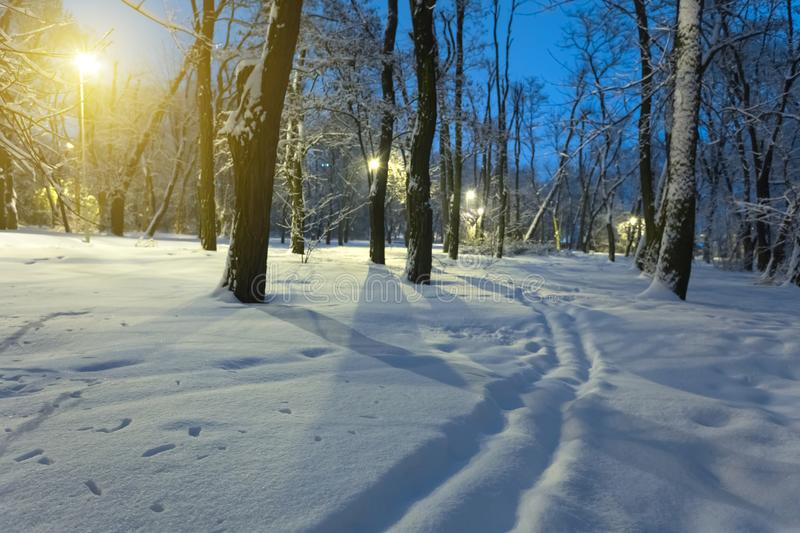 Winter snowbound park night scene stock photography