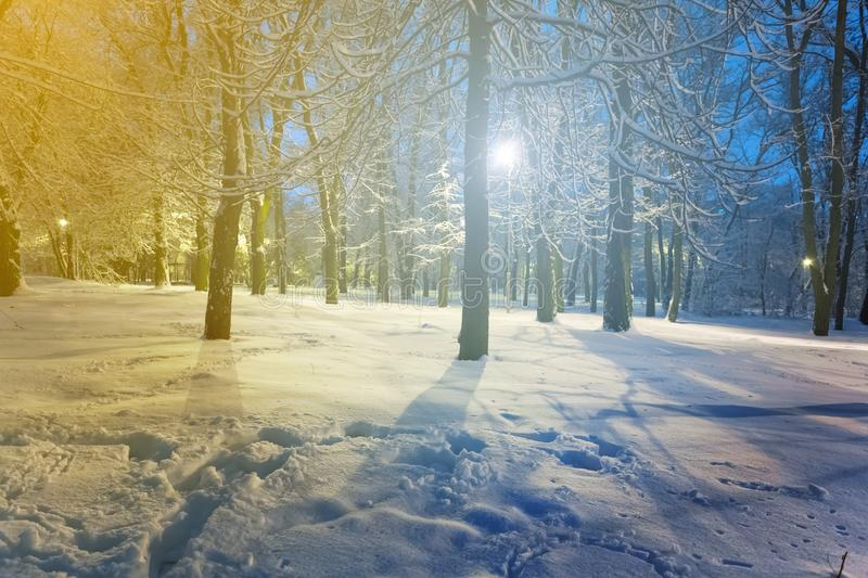 Winter snowbound park scene royalty free stock photography