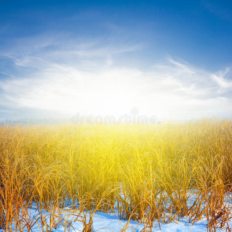 Winter snowbound steppe royalty free stock image