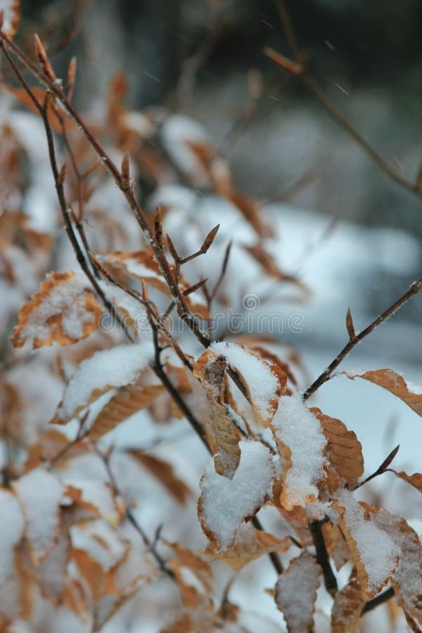 Winter... royalty free stock images