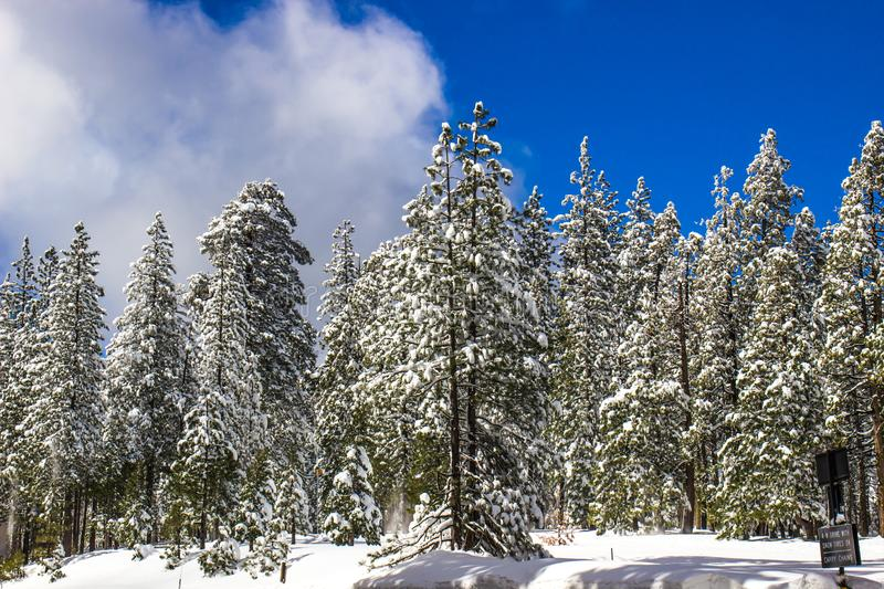 Winter Snowfall Covering Forest Trees. With Blue Sky Background And Clouds royalty free stock photo