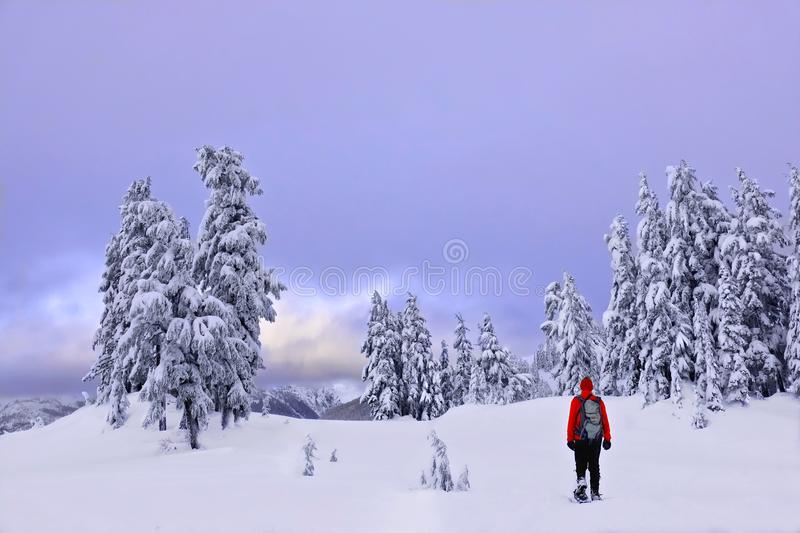 Winter snowshoe hiking in mountains. royalty free stock photos