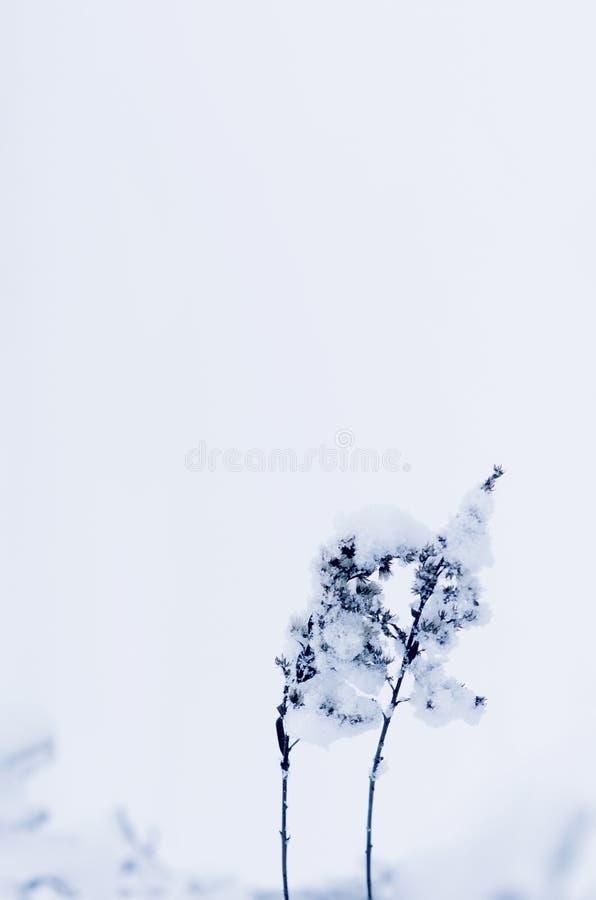 Winter snowwy field plant under snö i kallt moln Kylsäsongen Kreativ bearbetning royaltyfri bild