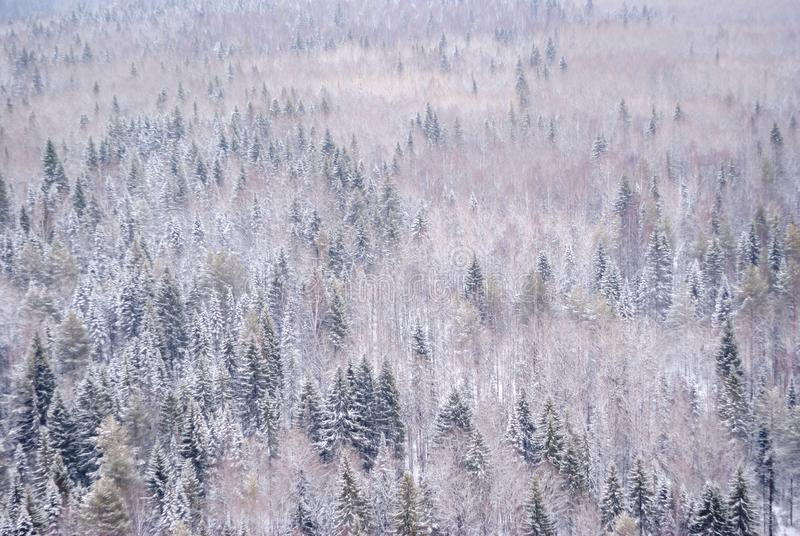 Winter snowy forest with a bird`s eye view royalty free stock photos