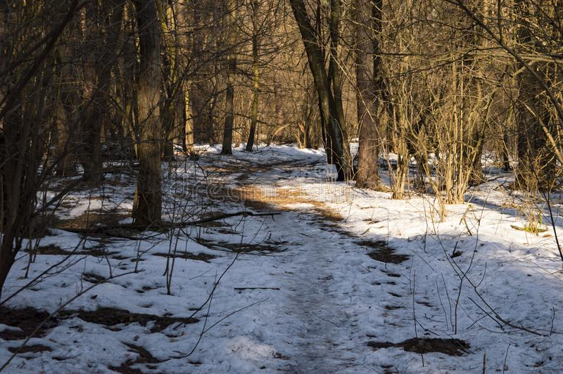 Winter snowy forest on a sunny day stock photography
