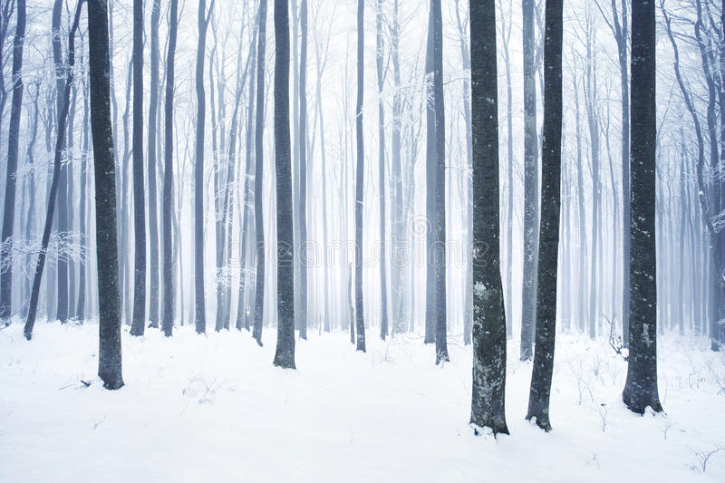 Download Winter snowy forest scene stock image. Image of outdoors - 45138209