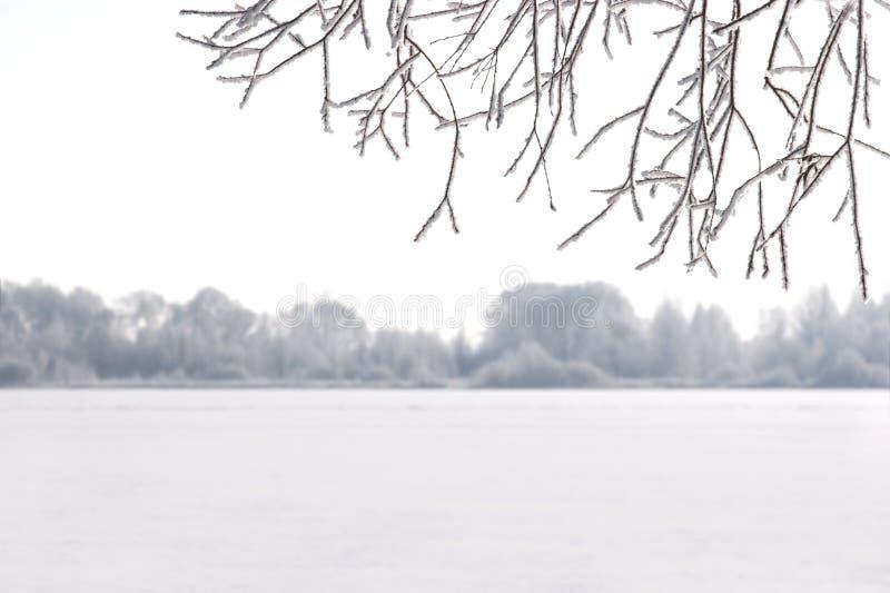 Winter snowy frosty scene