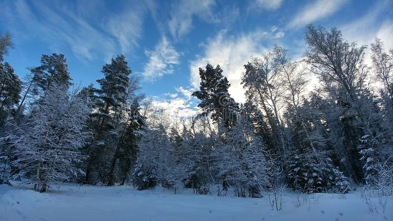 Winter snowy landscape in forest. Beautiful blue sky with clouds.  royalty free stock images