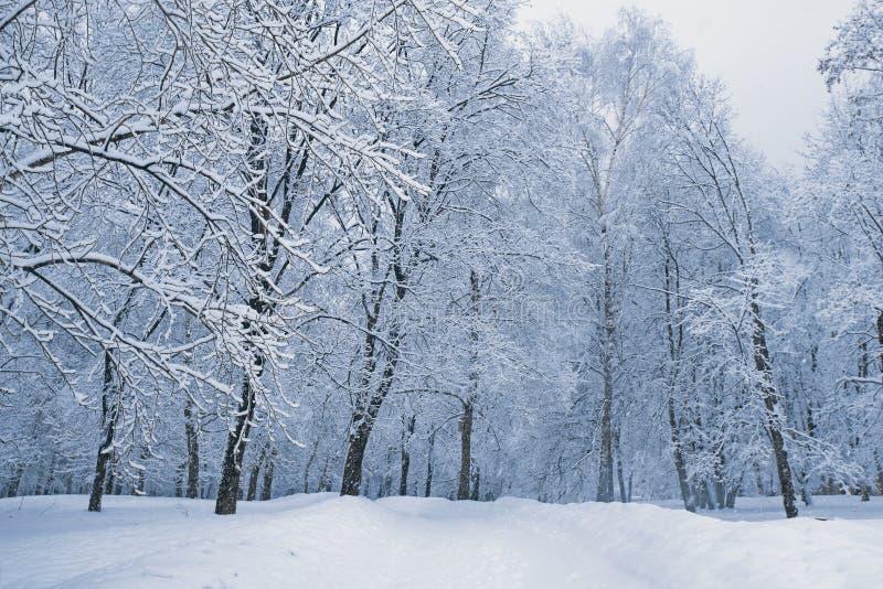 Winter snowy landscape, alley in park stock image