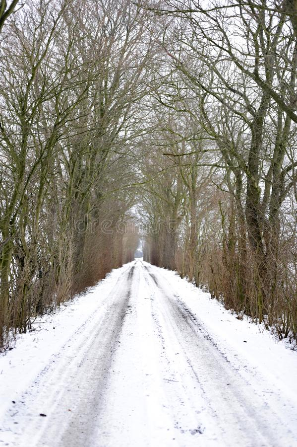 Winter snowy village alley road in the forest. North Holland, Netherlands royalty free stock images
