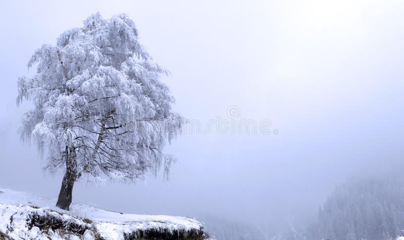 Download Winter Solitude tree stock photo. Image of black, cold - 13496104