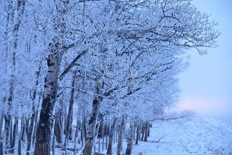 Winter-Sonnenaufgang mit Nebel lizenzfreie stockfotos