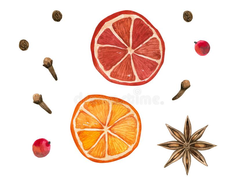 Winter spices. Oranges, star anise, clove, pepper. Hand drawn watercolor illustration. Isolated on white background. Winter spices. Cinnamon roll, oranges, star royalty free illustration