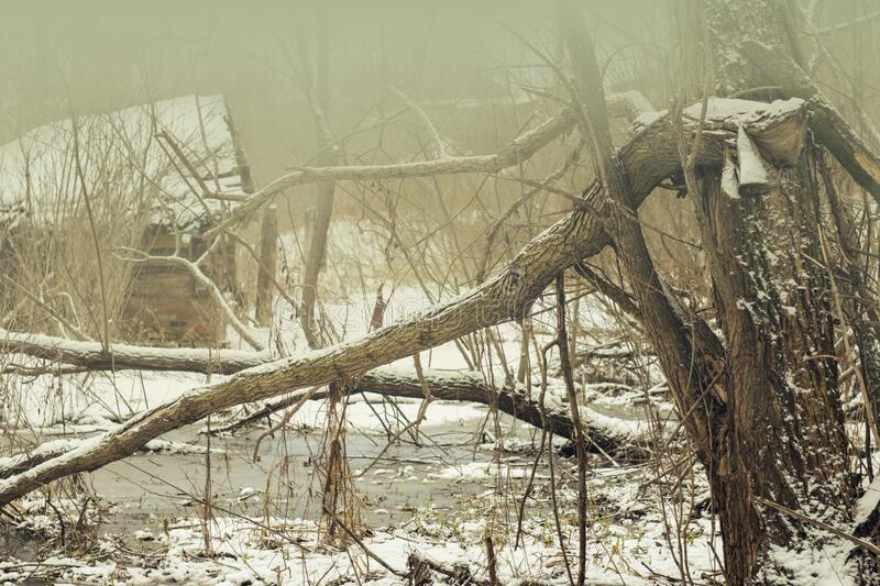 Winter or spring landscape thaw broken tree abandoned house water stream and snow melts fog. Nature landscape stock photo
