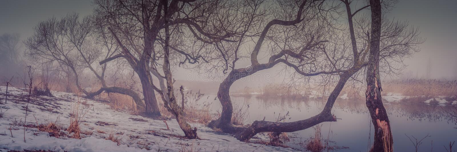 winter-spring misty landscape. panoramic view of the bare trees on the snowy coast of the river against the background of fog stock photo