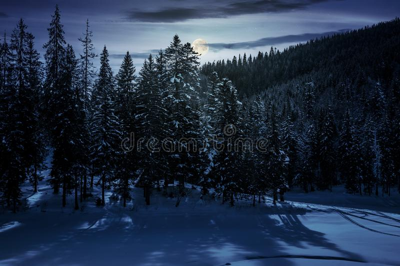 Winter spruce forest at night royalty free stock photo