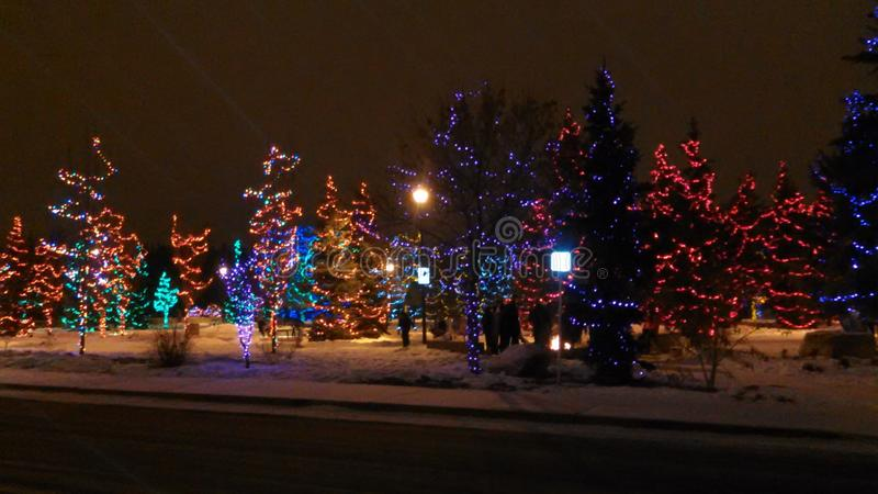 Winter in Spruce Grove stock photos